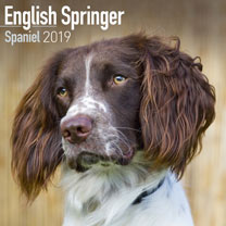 Dog Breed 2018 Calendar - English Springer Spaniel