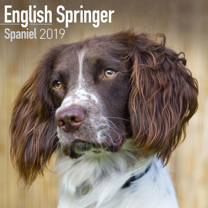 Dog Breed 2018 Calendar - English Springer Spaniel