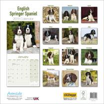 Dog Breed 2019 Calendar - English Springer Spaniel