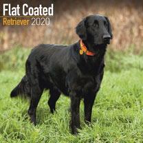 Dog Breed Calendar - Flat Coated Retriever