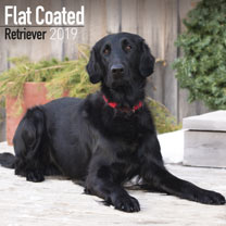 Dog Breed 2019 Calendar - Flat Coated Retriever