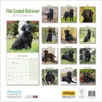 Dog Breed 2019 Calendar - Flat Coated Retriever
