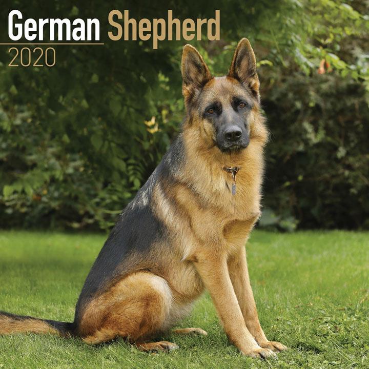 Dog Breed Calendar - German Shepherd