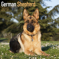 Dog Breed 2019 Calendar - German Shepherd
