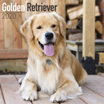 Dog Breed Calendar - Golden Retriever