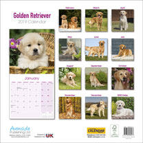 Dog Breed 2019 Calendar - Golden Retriever