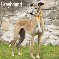 Dog Breed Calendar - Greyhound