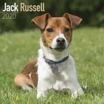Dog Breed Calendar - Jack Russell