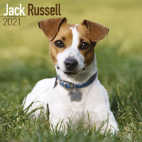 Dog Breed 2019 Calendar - Jack Russell