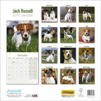 Dog Breed 2019 Calendar - Jack Russell