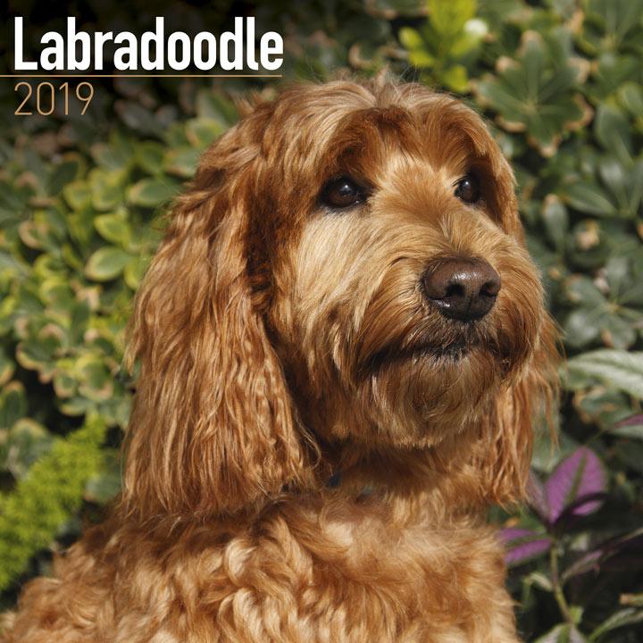 Dog Breed 2018 Calendar - Labradoodle