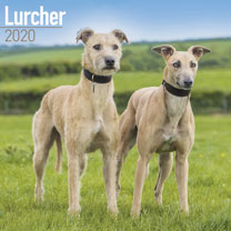 Dog Breed Calendar - Lurcher