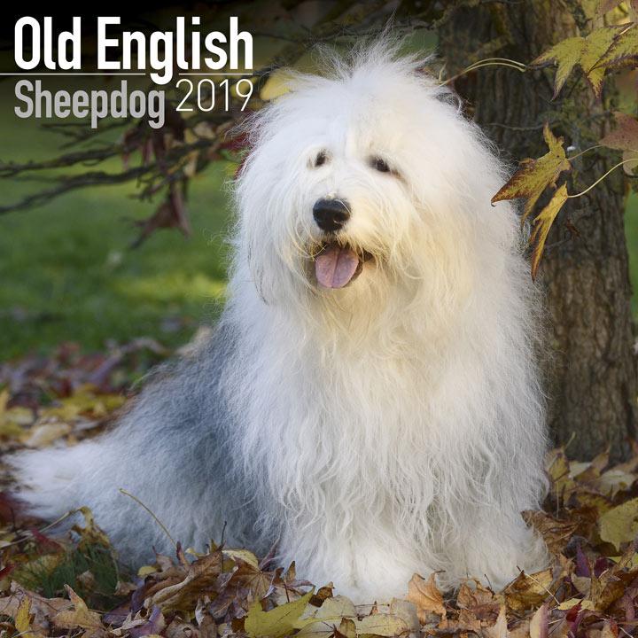 Dog Breed 2018 Calendar - Old English Sheepdog
