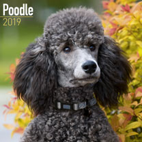 Dog Breed 2018 Calendar - Poodle