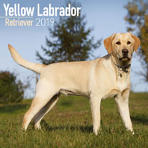 Dog Breed 2018 Calendar - Yellow Labrador Retriever