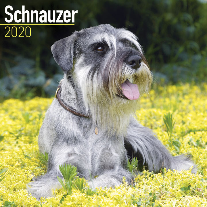 Dog Breed Calendar - Schnauzer