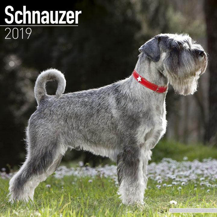 Dog Breed 2019 Calendar - Schnauzer