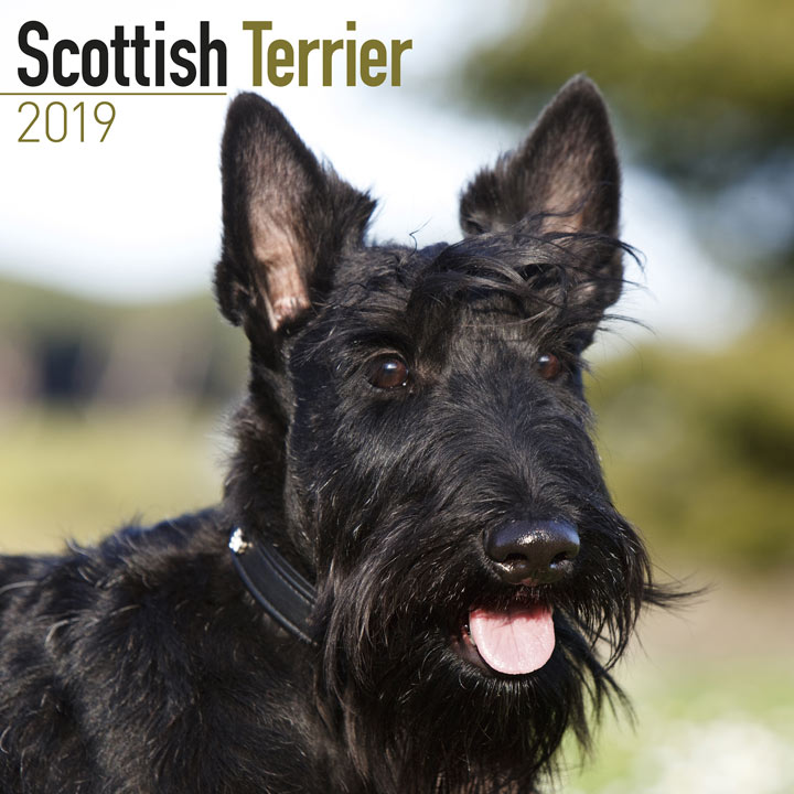 Dog Breed 2018 Calendar - Scottish Terrier