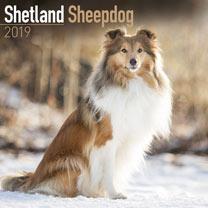 Dog Breed 2018 Calendar - Shetland Sheepdog