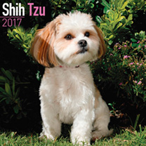 Dog Breed 2017 Calendar - Shih Tzu