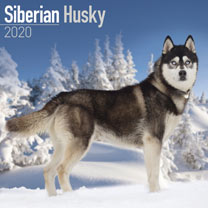 Dog Breed Calendar - Siberian Husky
