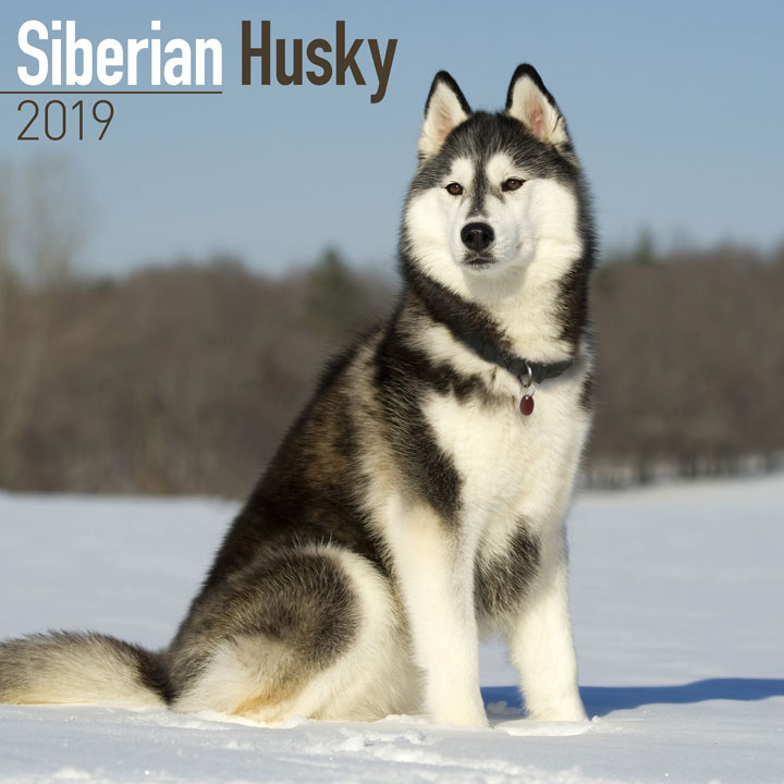 Dog Breed 2018 Calendar - Siberian Husky