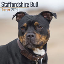 Dog Breed Calendar - Staffordshire Bull Terrier