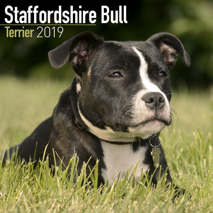 Dog Breed 2018 Calendar - Staffordshire Bull Terrier