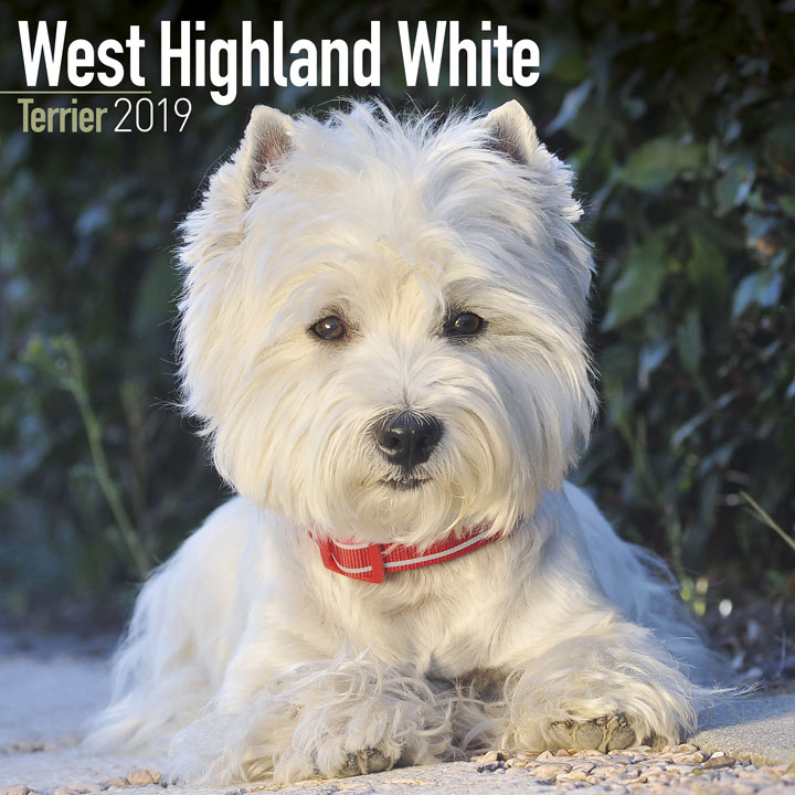Dog Breed 2019 Calendar - West Highland White Terrier