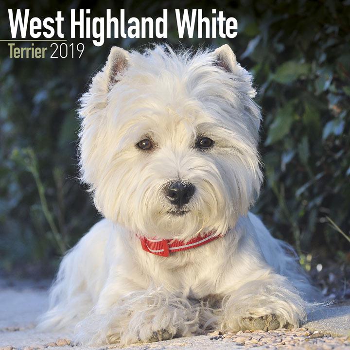 Dog Breed 2018 Calendar - West Highland White Terrier