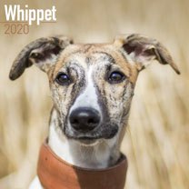 Dog Breed Calendar - Whippet