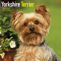 Dog Breed  Calendar - Yorkshire Terrier
