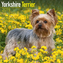 Dog Breed 2019 Calendar - Yorkshire Terrier