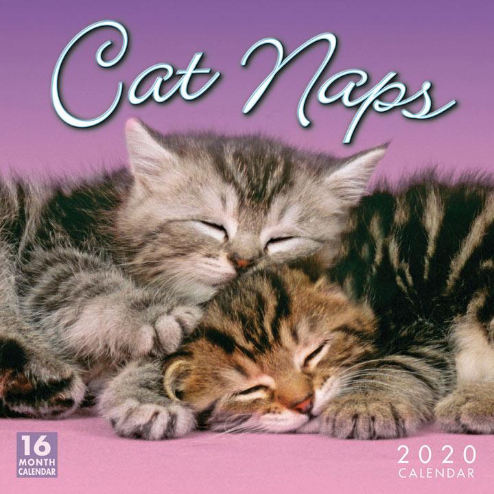 Wall 2020Calendar - Cat Naps