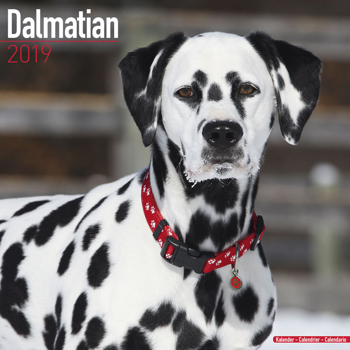 Dog Breed 2018 Calendar - Dalmation