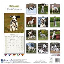 Dog Breed 2019 Calendar - Dalmation