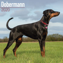 Dog Breed Calendar - Dobermann