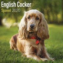 Dog Breed Calendar - English Cocker Spaniel