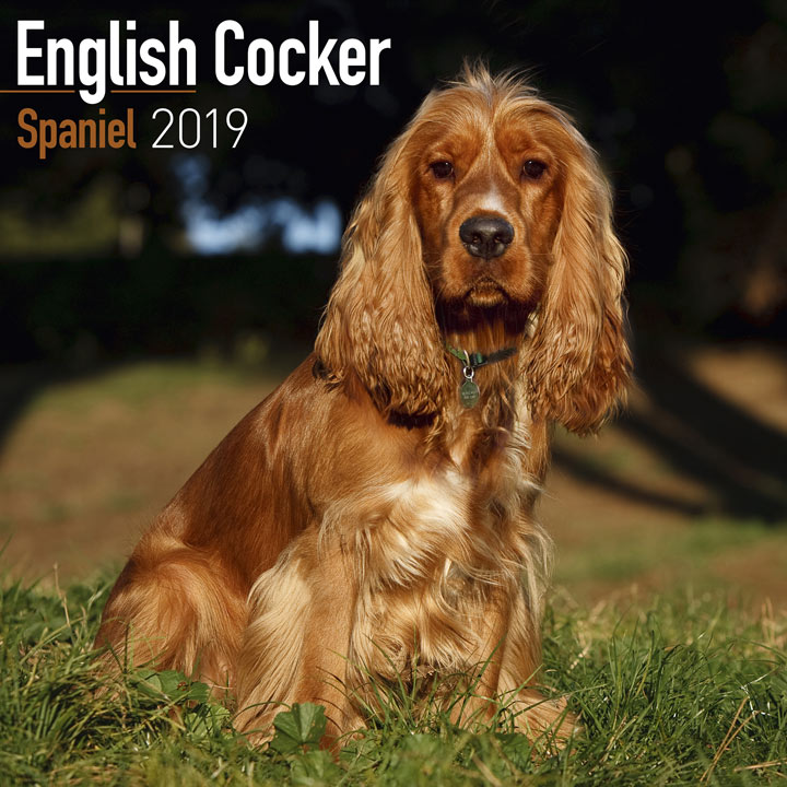 Dog Breed 2018 Calendar - English Cocker Spaniel