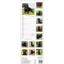 Slimline Calendar - Black Labrador Retriever