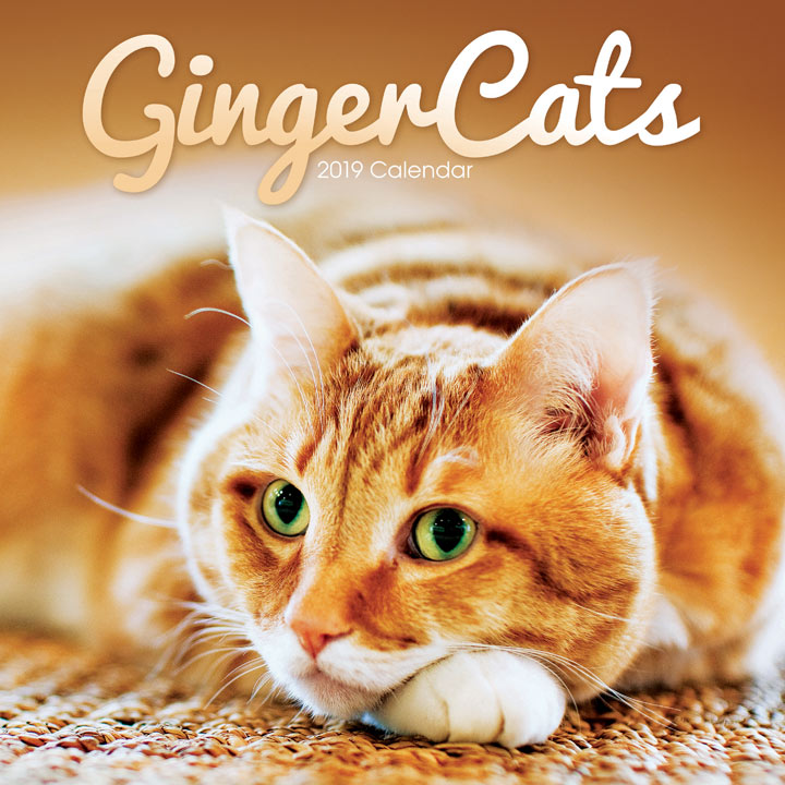 Wall Calendar - Ginger Cats