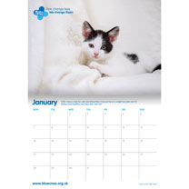 Blue Cross 2020 Calendar