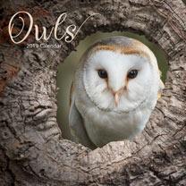 Wall Calendar - Owls