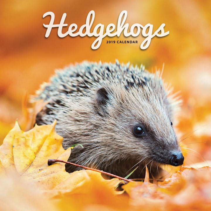 Wall Calendar - Hedgehogs