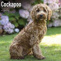 Dog Breed Calendar - Cockapoo