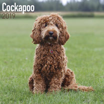 Dog Breed 2019 Calendar - Cockapoo