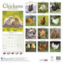 Wall Calendar - Chickens