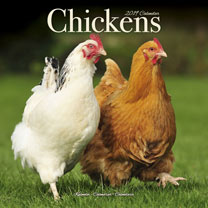 Wall Calendar - Chickens