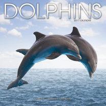 Wall Calendar - Dolphins