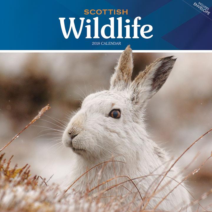 Wall Calendar - Scottish Wildlife